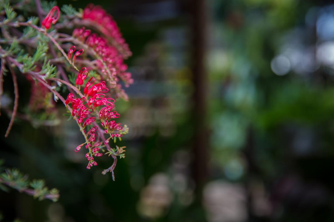 Noosa-Acres-Natives katja anton Photography