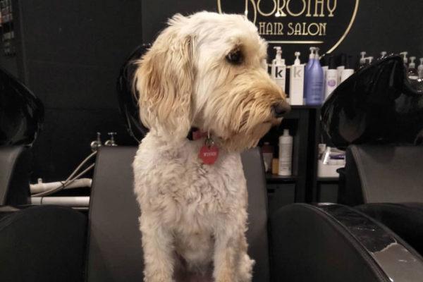 Pet Tales: Winnie The Salon Style Inspiration