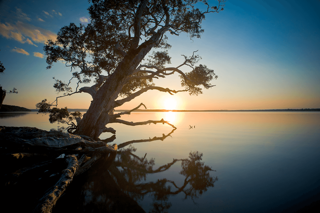 Lake Weyba Sentinel Credit B Molloy