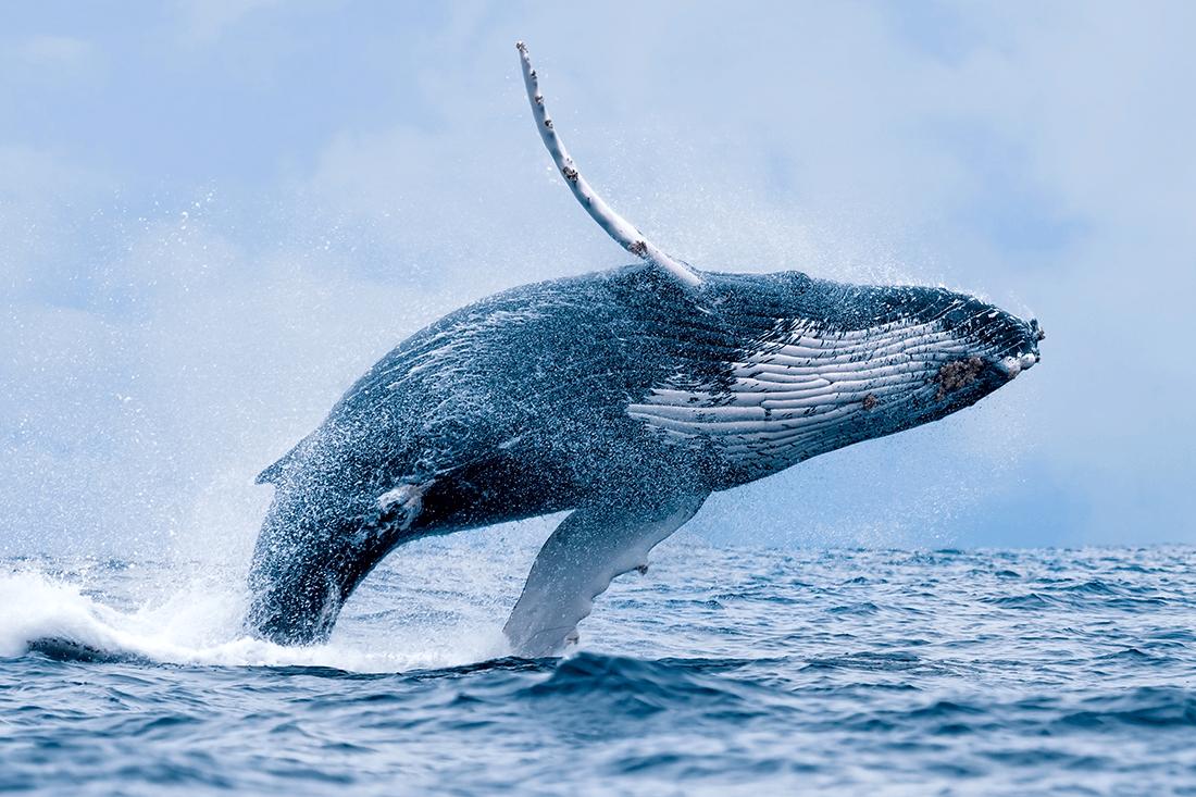 ocean rider whale watching