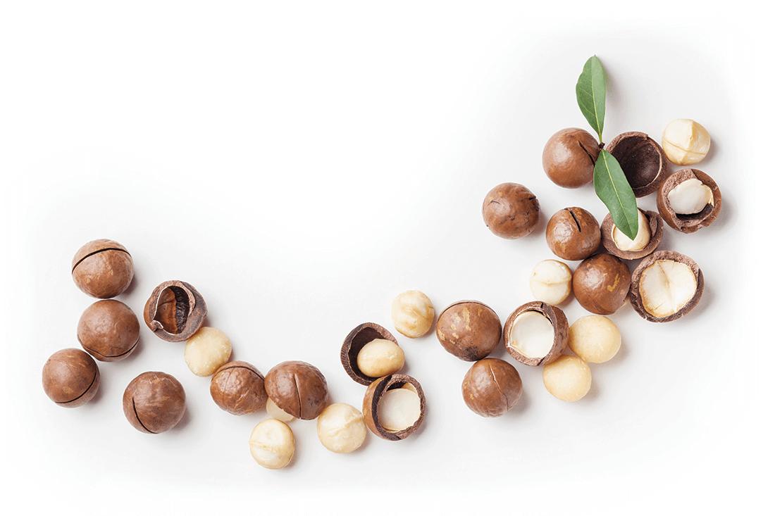 Macadamias In Noosa