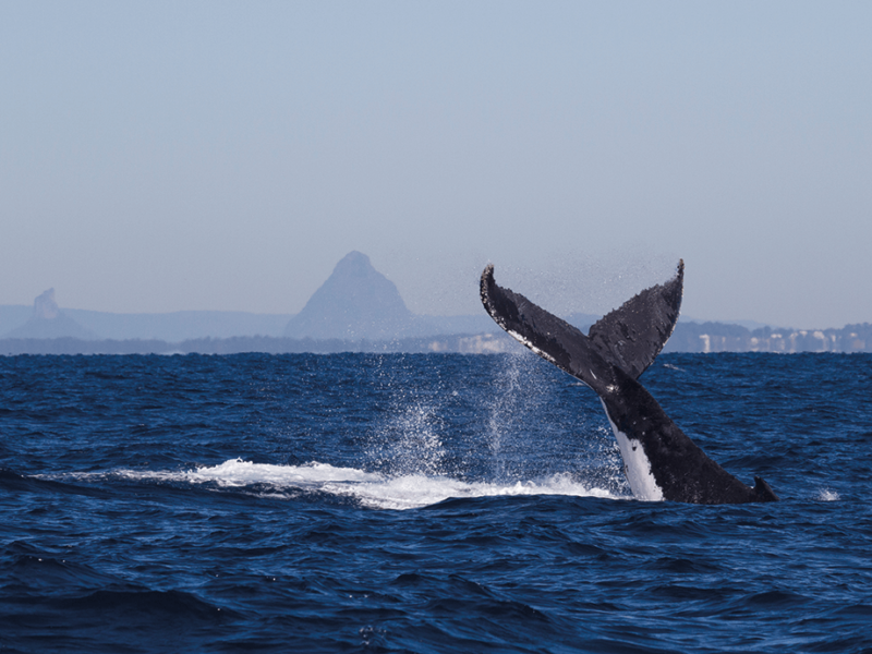 Whale WIN