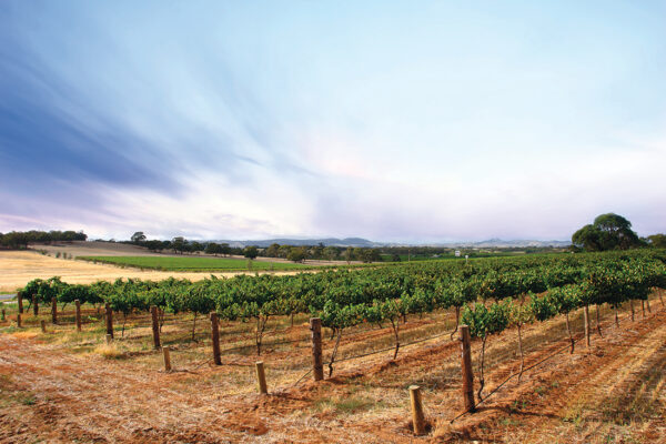 Wing it to the Wineries: Sunshine Coast Airport